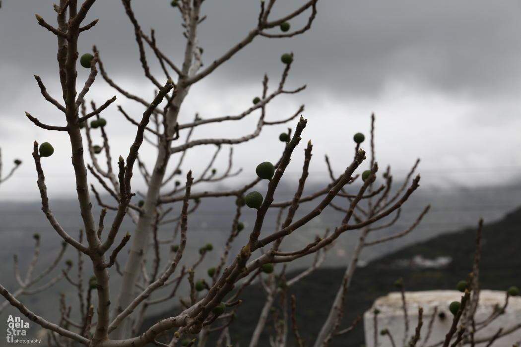 Μια βροχερή μέρα στη Λαρδιά Αγγελική Στρατή ANDROSFILM VANGLOUK (8)