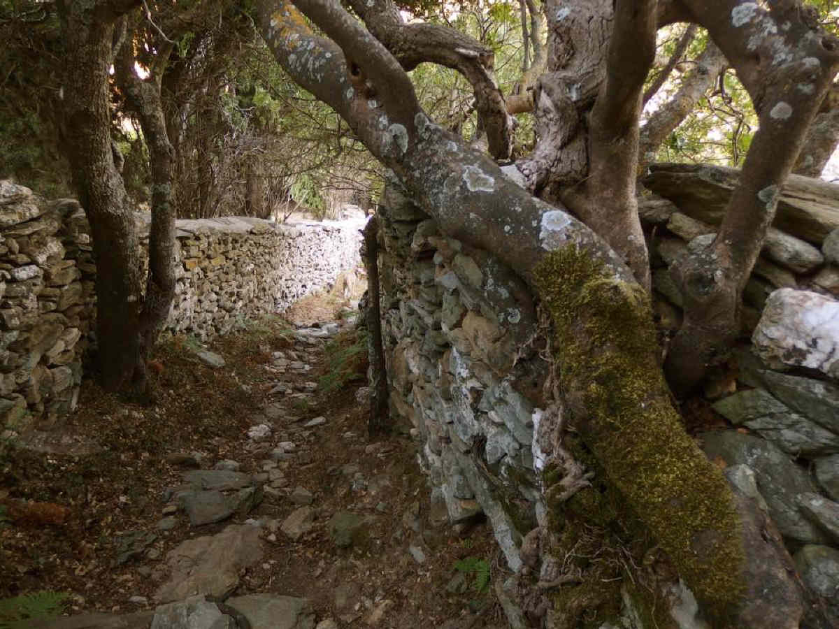 athina kyrtata in andros routes trail no 10 androsfilm 11 august 2016 vanglouk  (3)_1
