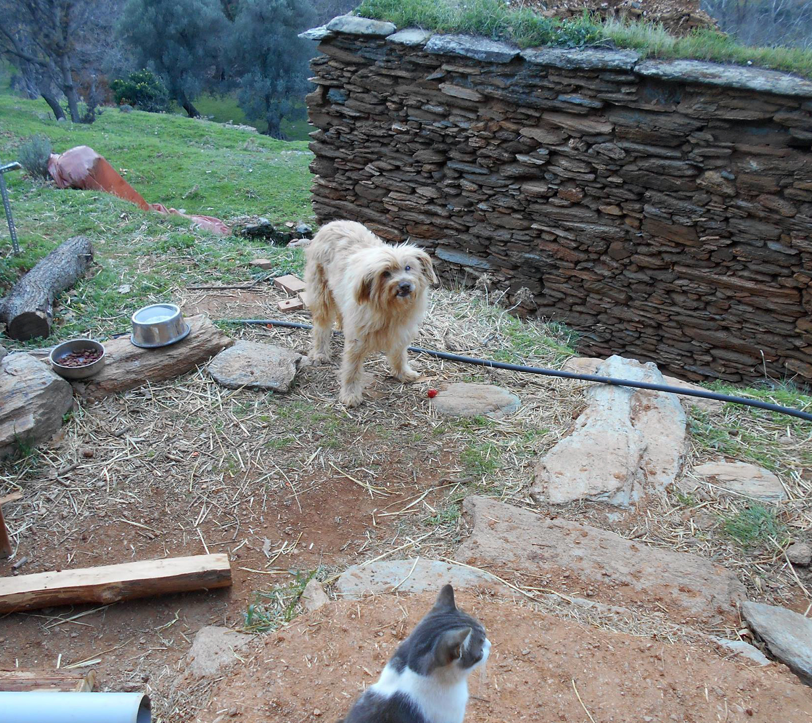 vanglouk-androsfilm-a-lost-dog-in-remata-andros-2016-dec-1