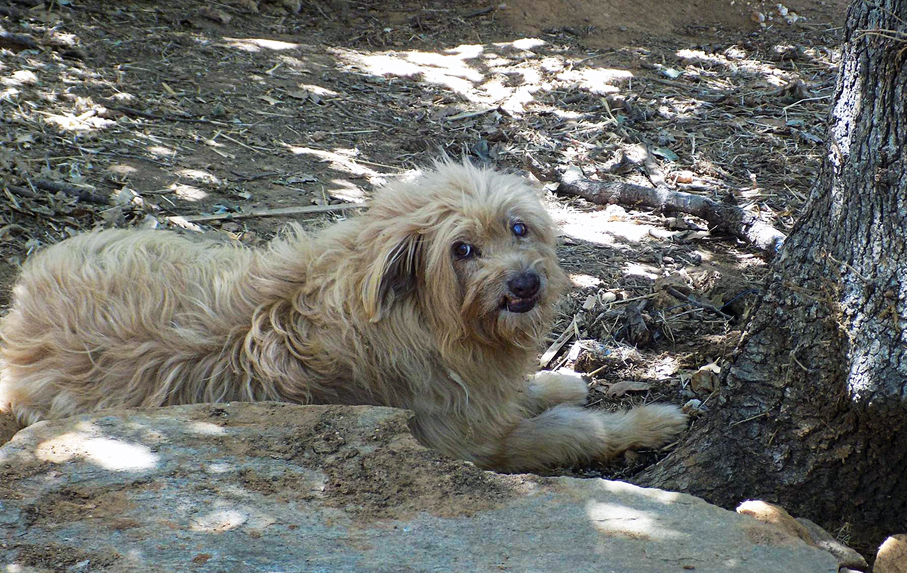 vanglouk-androsfilm-a-lost-dog-in-remata-andros-2016-dec-2
