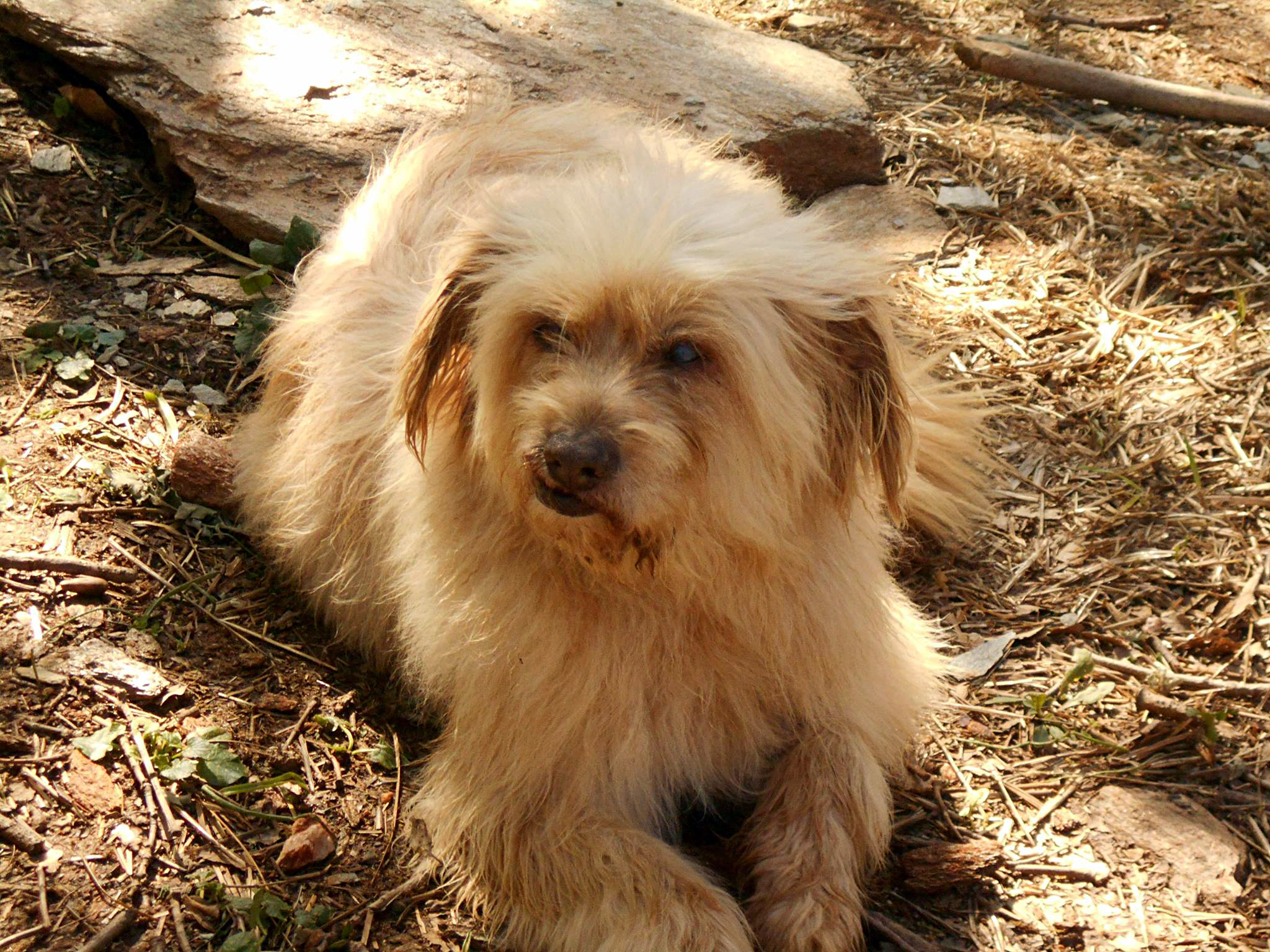 vanglouk-androsfilm-a-lost-dog-in-remata-andros-2016-dec-3